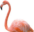 Flamingo Land Header Flamingos