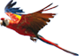 Flamingo Land Header Parrot